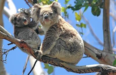 Tasmanien Fähre